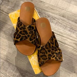 Yellow Box Cammee in Leopard